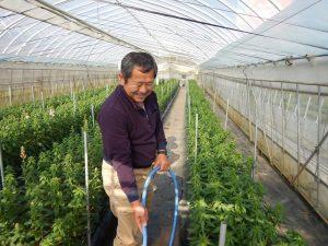 花で農業再開